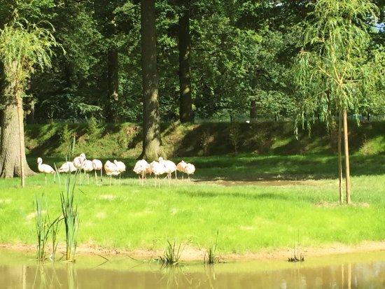 Zoo du Bois d'Attilly: ILE AUX FLAMANTS ROSE