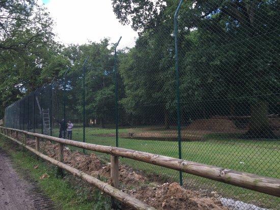 Zoo du Bois d'Attilly: NOUVELLE ENCLOS AUX TIGRES