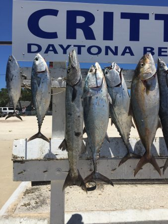 Daytuna Fishing Charters