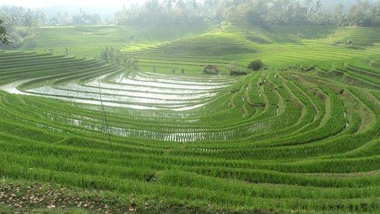 Bali Must Be Crazy - Guide et Chauffeur Français à Bali à Java : rizieres en terasse