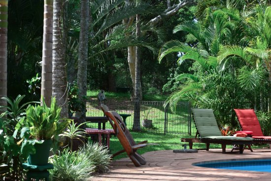 Avalone Guest House: Tropical gardens