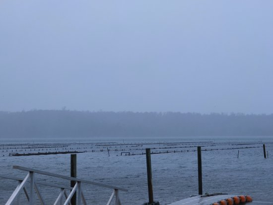 Goshen, Australia: oyster farm outside