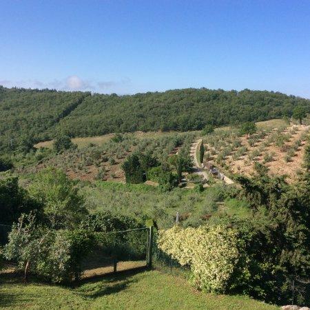 Adine in Chianti
