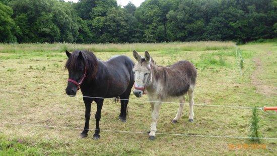 La Maison de Louison : L'âne Gaston, le mâle et sa copine Léonce la jument. Inséparables ils s'adorent et nous de même.