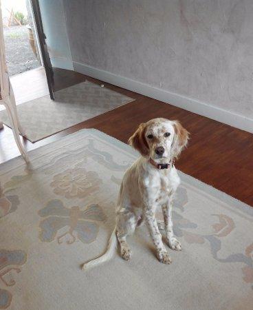 La Maison de Louison : Margot la sympathique chienne de la maison très accro aux galettes de Pont Aven