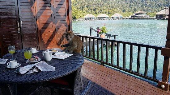Gayana Eco Resort: IMG-20160618-WA0003_large.jpg