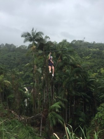 Skyline Eco Adventures - Akaka Falls: Over the Falls!