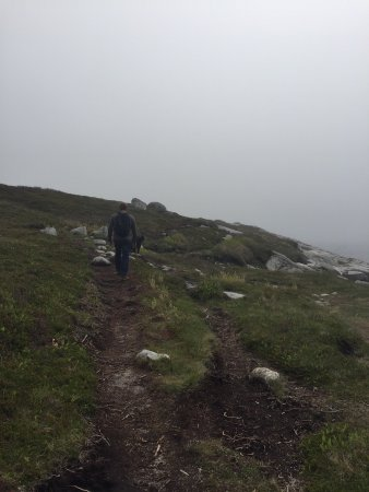 Prospect, Canada: Hiking the High Head Trail on a foggy spring day.