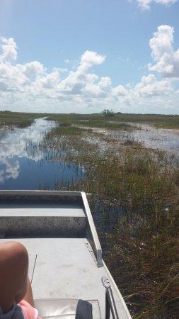 Gator Park: Swampland!