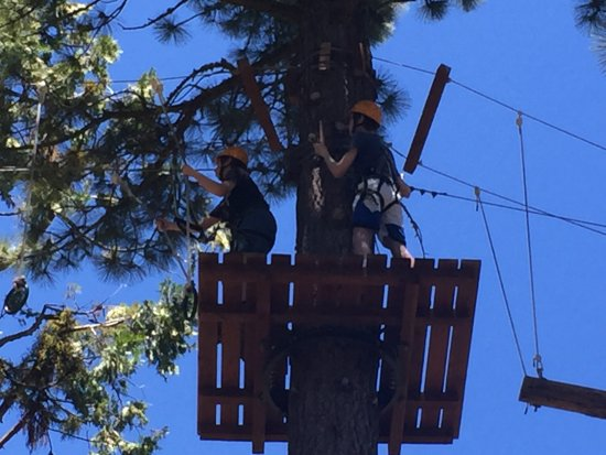 Tahoe Treetop Adventure Park: Expert course - I chose to watch from the ground...