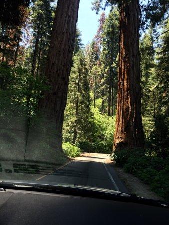 Three Rivers, Καλιφόρνια: photo2.jpg