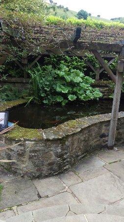 River Cottage: IMAG0226_large.jpg