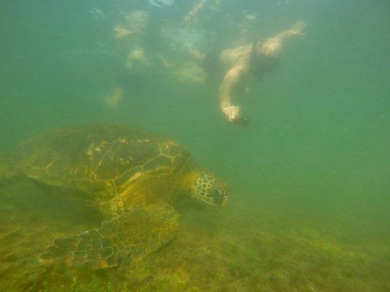 Puerto Villamil, Ecuador: Me photographing a turtle.