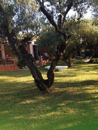 Meso Gerakari, Grecia: Giardino