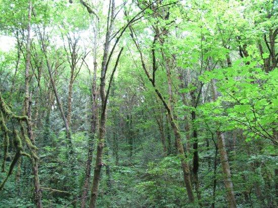 Marquam Nature Park