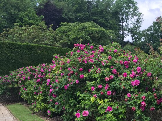 Upper Slaughter, UK: Rose border