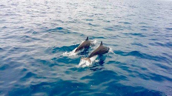 Crocodile Bay Resort: Super dolphin pods