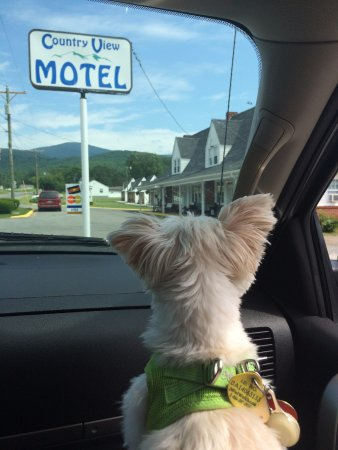 Country View Motel: Arctic Zulu cannot wait to explore the grounds!