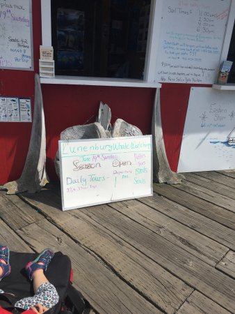 Lunenburg Whale Watching Tours : sign advertising puffin tours