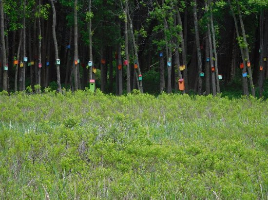 South Hero, VT: Birdhouse Forest at White's Beach