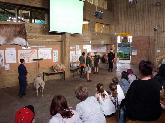 Noah's Ark Zoo Farm: 20160623_120325_large.jpg