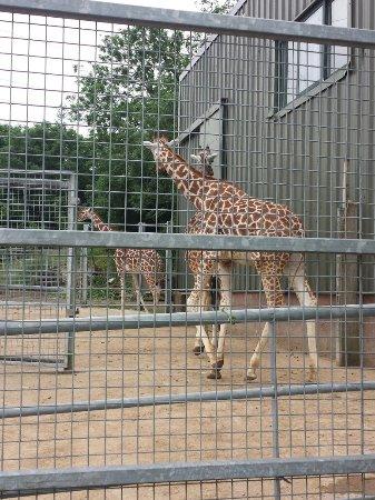 Noah's Ark Zoo Farm: 20160623_111005_large.jpg