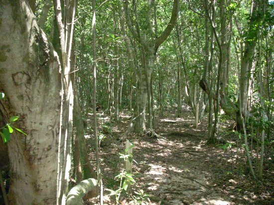 castellow hammock preserve and nature center  hammock forest hammock forest   picture of castellow hammock preserve and nature      rh   tripadvisor