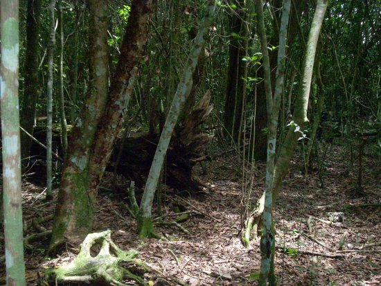 castellow hammock preserve and nature center  secluded forest secluded forest   picture of castellow hammock preserve and nature      rh   tripadvisor