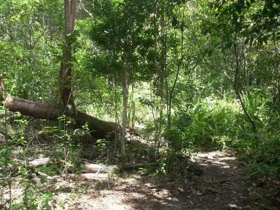 Castellow Hammock Preserve and Nature Center