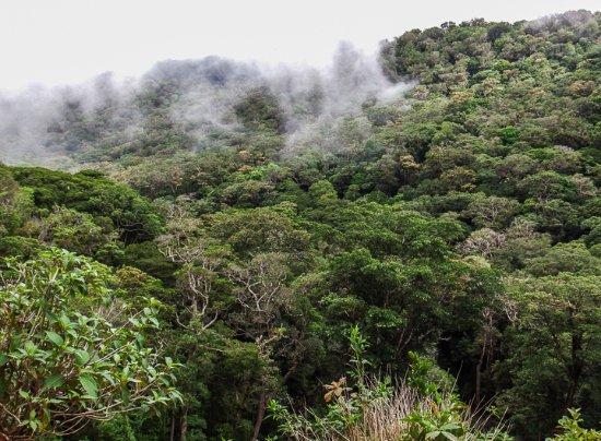 San Vito, Costa Rica : Fog over the Amistad Biosphere Reserve forest near Sandi family residence.