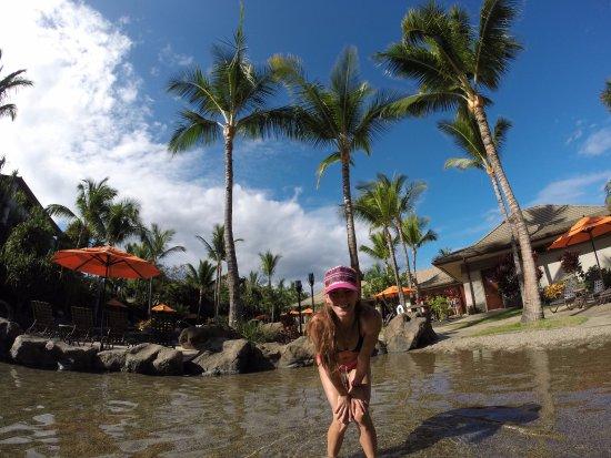Ho'olei at Grand Wailea: Pool has cool rocky beach area