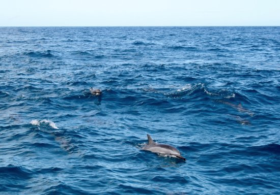 Kilauea, Hawái: Spinner dolphins from the boat