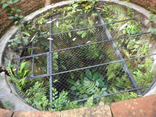 Siripanna Villa Resort & Spa: not sure what this was??? interesting/scary!