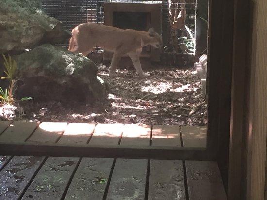 Santa Fe College Teaching Zoo