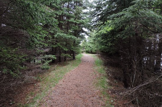 Arisaig Provincial Park : One of the wooded trails