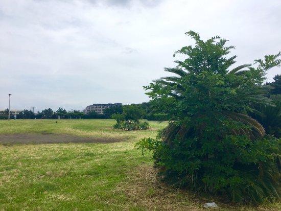 Shonan Kaigan Park