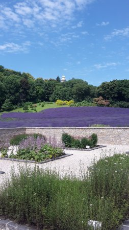 Pannonhalma Abbey Gardens and Herbal Lavender House: Lavender fields Pannonhalma