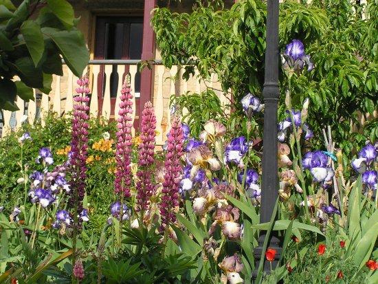 Bendalls Accommodation: Spring brings abundant flowers to the garden