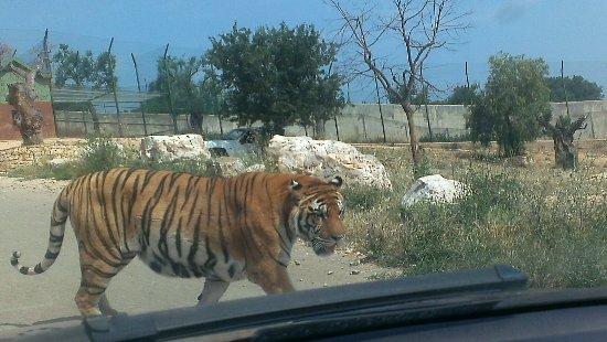 zoo safari fasano 23 06 2016 picture of zoo safari fasano