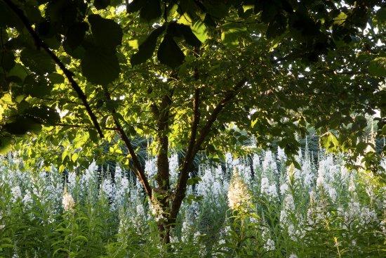 L 39 all e des pilobes en juin picture of le jardin plume for Auzouville sur ry jardin plume