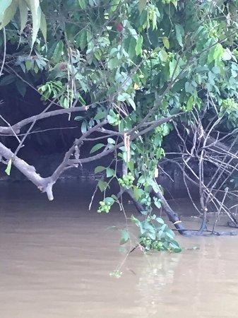 Sukau, Malaysia: 裡頭有鱷魚發現了嗎