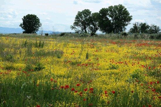 Terontola, Italia: kleurrijke natuur