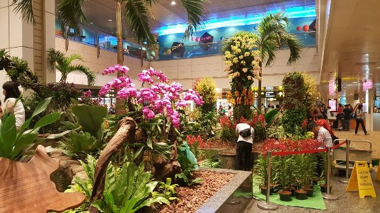 Orchid Garden & Koi Pond