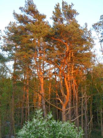 Ferienwohnung am Wald