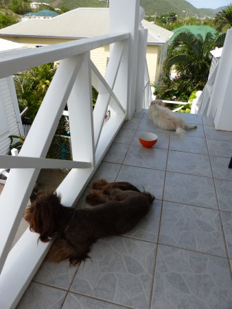 Cades Bay, แอนติกา: Maui and Misty visited us each morning while we drank coffee on the balcony