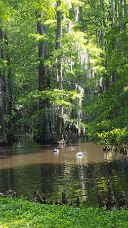 Swan Lake Iris Gardens: Swan Iris Lake