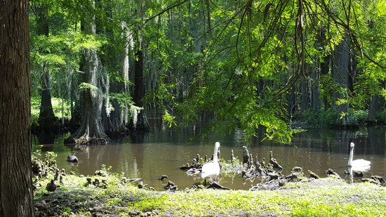 Swan Lake Iris Gardens