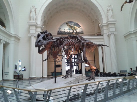The Field Museum: Sue