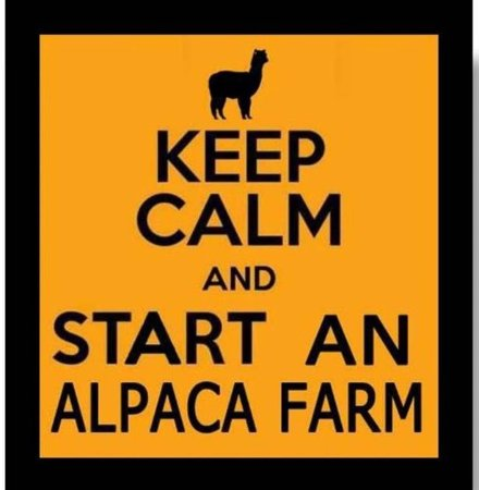 Destiny Alpaca Farm: Alpacas are so much fun!