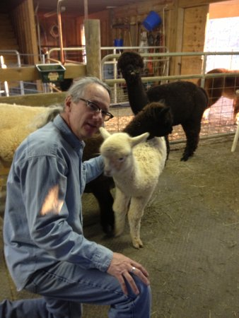 Destiny Alpaca Farm: We love our animals!